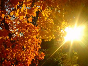 900606_autumn_leaves_1.jpg